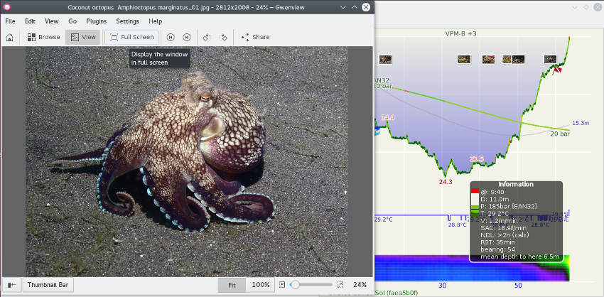 FIGURE: Full-screen photo on dive profile